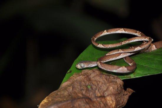Drake Bay, Costa Rica: Snake
