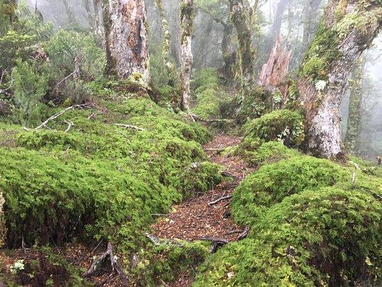 Tuatapere, Νέα Ζηλανδία: photo0.jpg