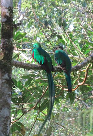 Cerro Punta, Panama: Hiking and Birding.