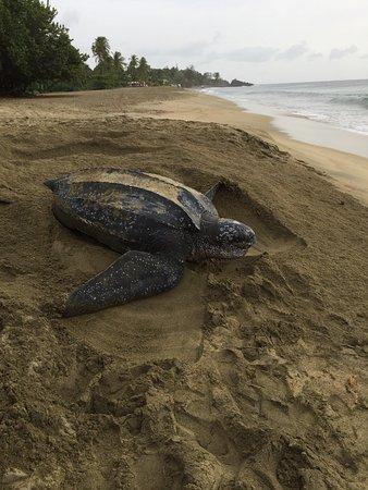 Turtle Beach by Rex Resorts: photo1.jpg