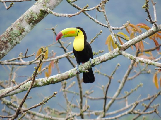 Mountain Equestrian Trails : A birdwatcher's paradise!  Keel-billed Toucan