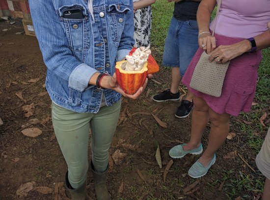 Kilauea, HI: The Cacao pod opened and the beans and fruit within