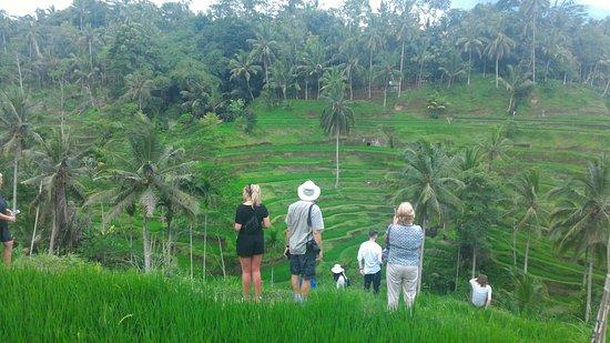 Bali Trekking Trails
