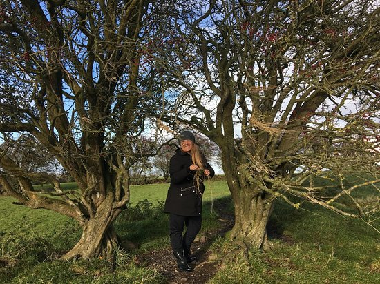 County Meath, Ierland: Photo Michael caught of me making wishes on the fairy tree at the Hill of Tara:-)