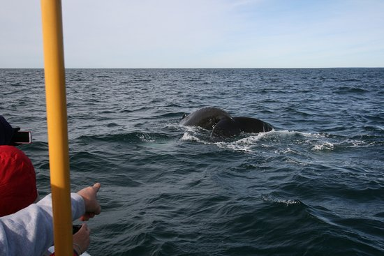 Grand Manan, Canada: Getting ready to fliip her tail.