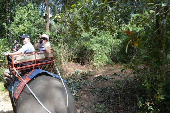 Nosey Parker's Elephant Camp - Private Day Tours : Spacerek po lesie deszczowym