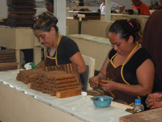 Luna International Hostel: We went on the Cigar factory tour - better than tours we did in Cuba.