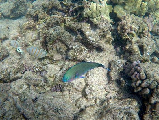 Ahihi-Kinau Natural Area Reserve: Snorkeling the nature reserve