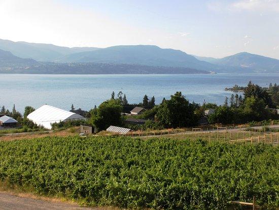 Summerhill Pyramid Winery صورة