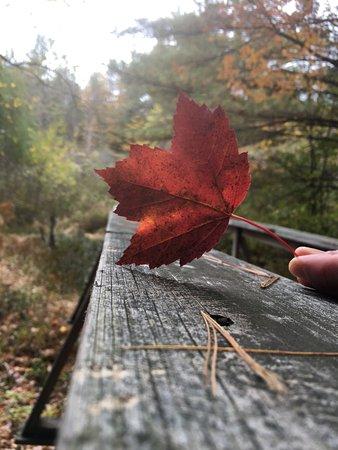 Stonewall Farm: Lovely fall foliage along the nature trails.