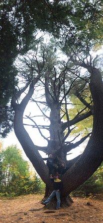 Stonewall Farm: Must see this tree!