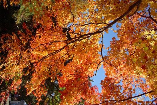 Sogi Park : 曽木公園 紅葉2