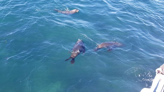 Cowes, Australia: Seals at seal rock
