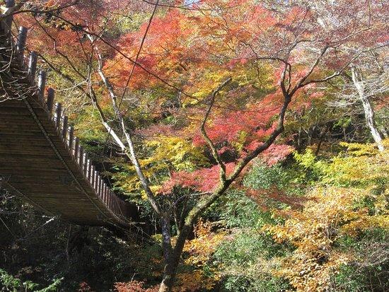 Takahagi, Jepang: 吊橋の下から紅葉写真
