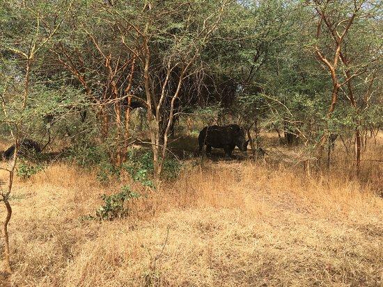 La Petite Cote, Senegal: Reserve De Bandia