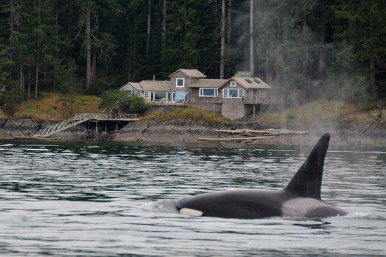 Campbell River, Canada: Orca