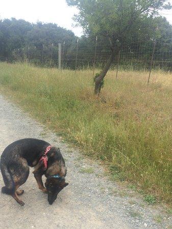 Garin Regional Park: Nook loving her walk at Garin