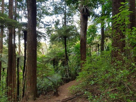 Whangarei, Yeni Zelanda: Walk