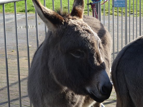 Knottingley, UK: Very friendly donkey