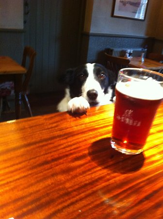 Bosham, UK: Dogs are welcome
