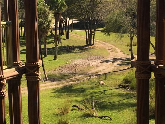 Disney's Animal Kingdom Villas - Kidani Village: photo2.jpg