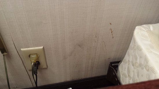 Quality Inn Airport: Peeling wallpaper and unknown stains on wall