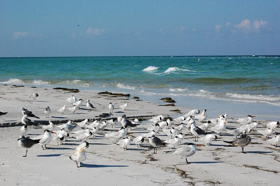Bean Point: SEa birds resting (very important not to bother them!!!)