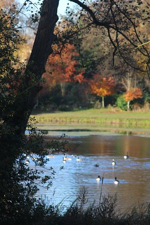 Palladian bridge at stowe landscape gardens picture of national national trust stowe stowe landscape gardens lake and ducks workwithnaturefo