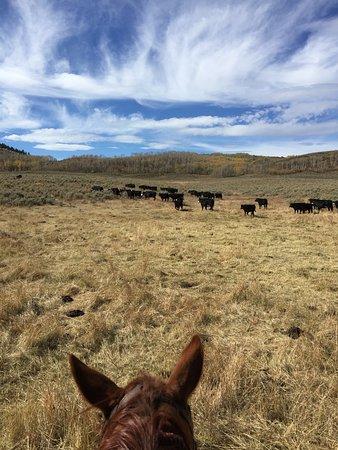 Foto de Rusty Spurr Ranch