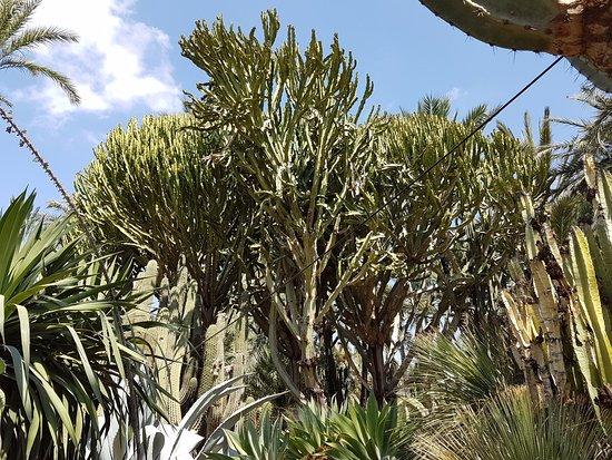 Elche, İspanya: palmiers