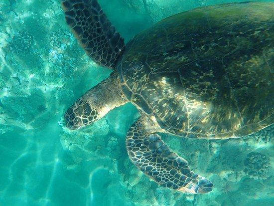 Blue Water Rafting: Loved the turtles - so fun!!