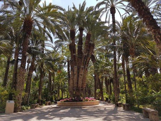 Elche, İspanya: sissi