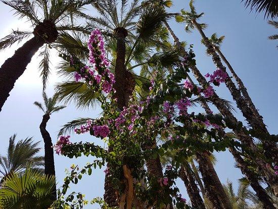 Elche, İspanya: fleurs