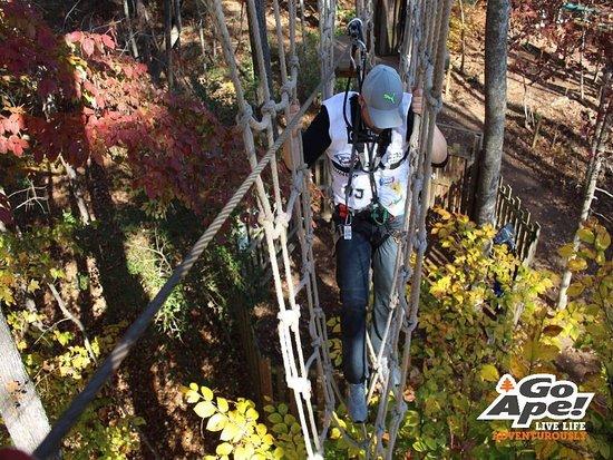 Go Ape Treetop Adventure Course: photo2.jpg