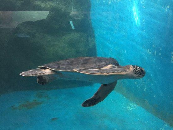 Centro Mexicano de la Tortuga: Turtle