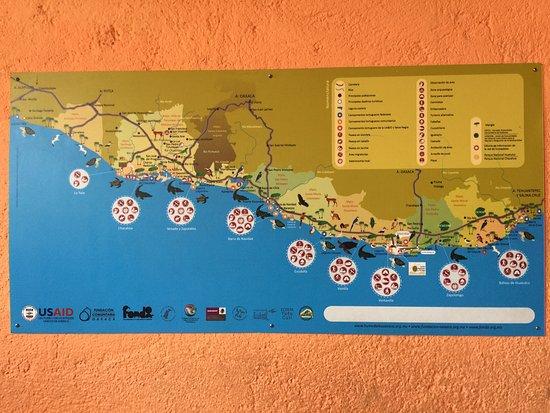Centro Mexicano de la Tortuga: Info map