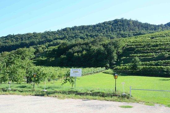 Rossatz, Österreich: looking out over their vineyards from veranda
