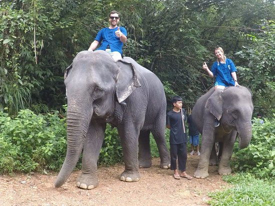 Washing and scrubbing the elephants - Picture of Phang Nga ...