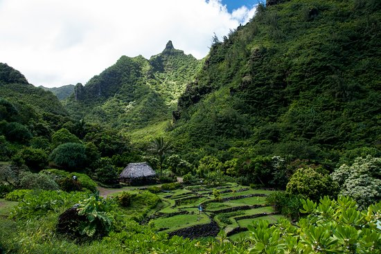 Limahuli Taro Terraces - Picture of Limahuli Garden and Preserve ...