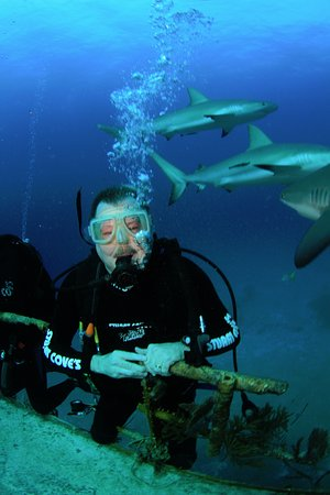 Île de New Providence : Shark everywhere - awesome dive.