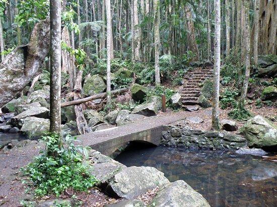 Mount Tamborine Bild