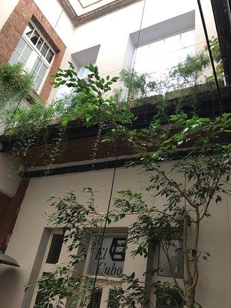 El patio 77, first eco-friendly B&B in Mexico City: photo5.jpg
