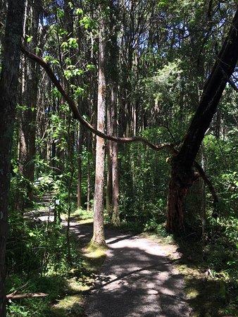 Kerikeri, New Zealand: photo2.jpg