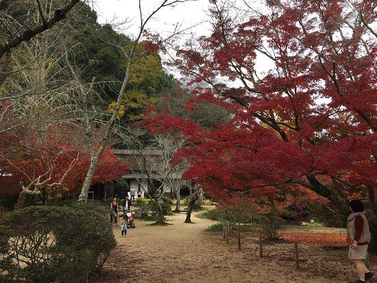 Kinko Garden: 紅葉の時期は、さらに綺麗です。