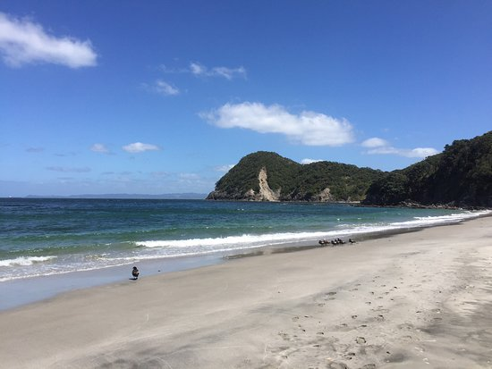 Whangarei Heads, นิวซีแลนด์: We just went straight from the car park to Smugglers Cove but I'm sure the views from the full l