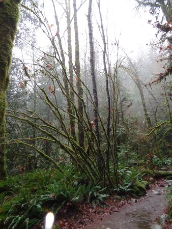 Vancouver Utara, Kanada: im Park