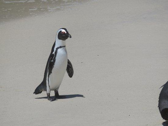 Edgemead, África do Sul: Boulder beach