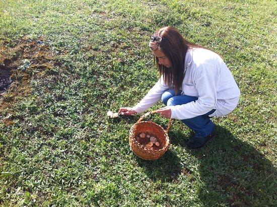 Poyatos, Spanien: Búsqueda de setas en temporada.Casa de las hazas