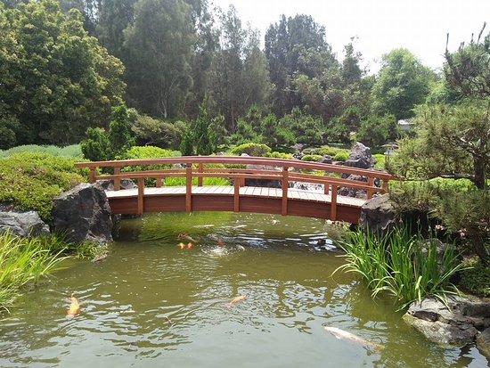 Koi pavilion picture of gosford japanese gardens point for Koi fish pond sydney
