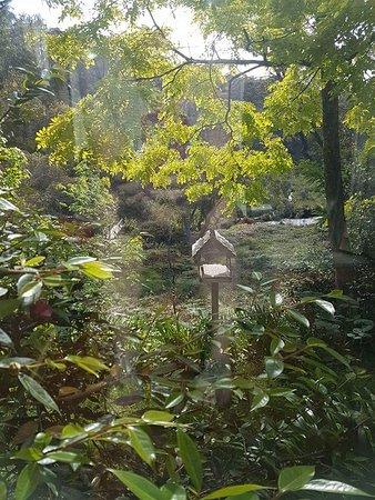 Wentworth Falls, Australia: FB_IMG_1479636107389_large.jpg